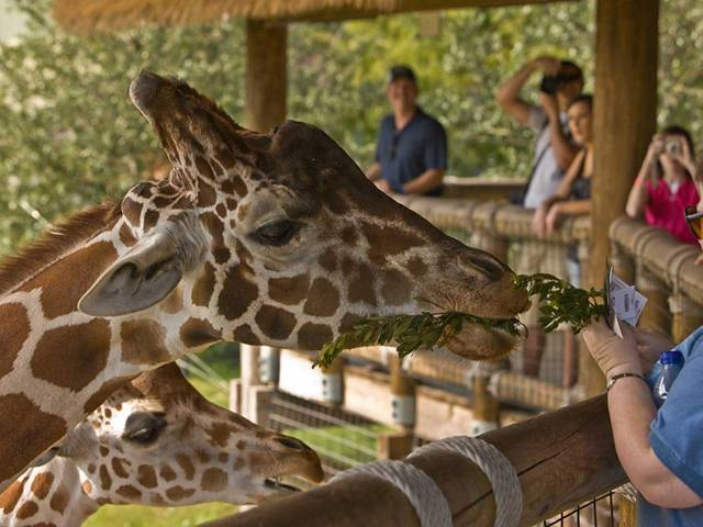 Escape to the Jacksonville Zoo and Gardens for the only walking safari in Northeast Florida.